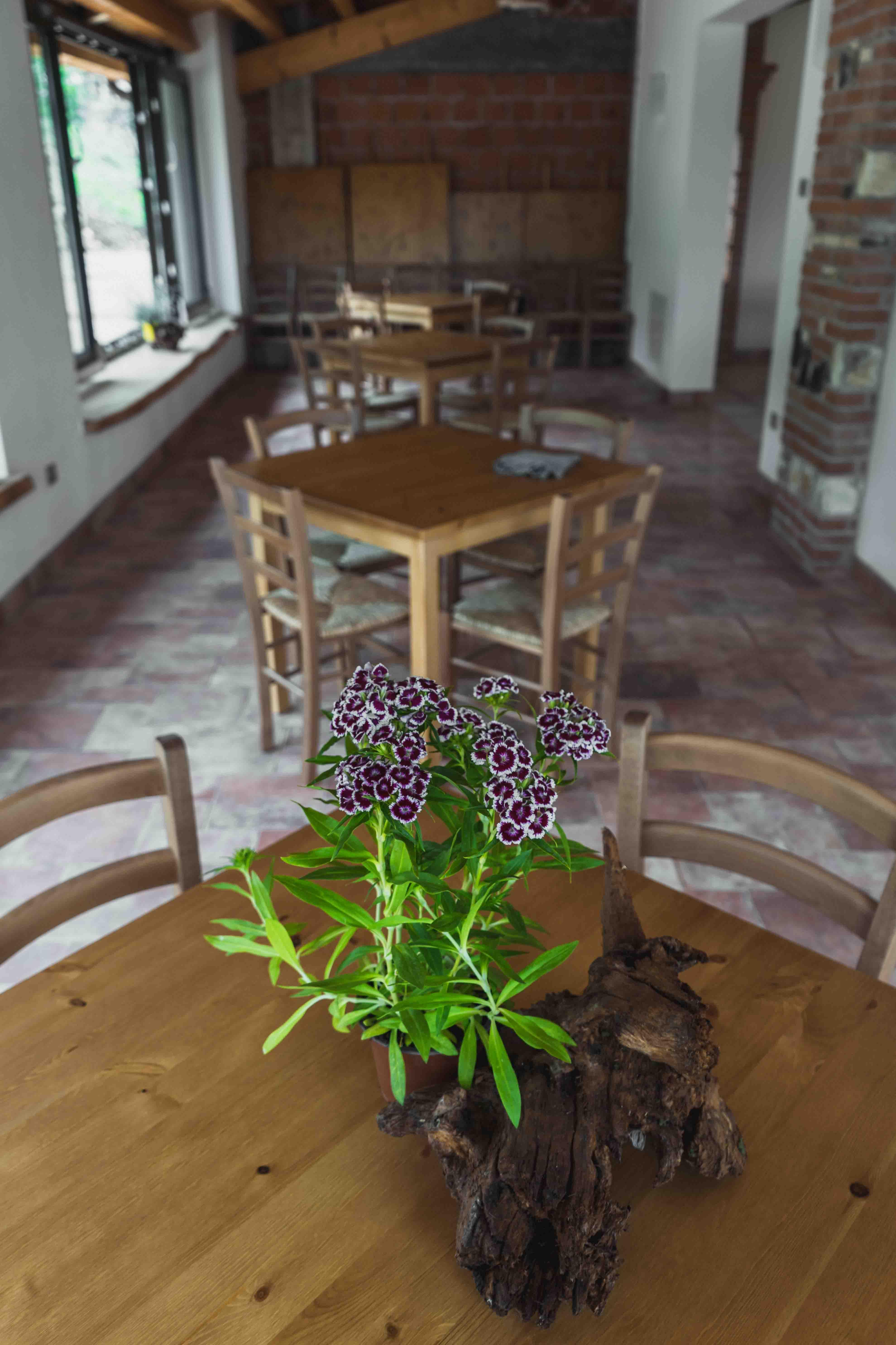 Tra i glicini e il sambuco riunioni meeting conferenze feste vacanza scout classe tretto schio vicenza veneto